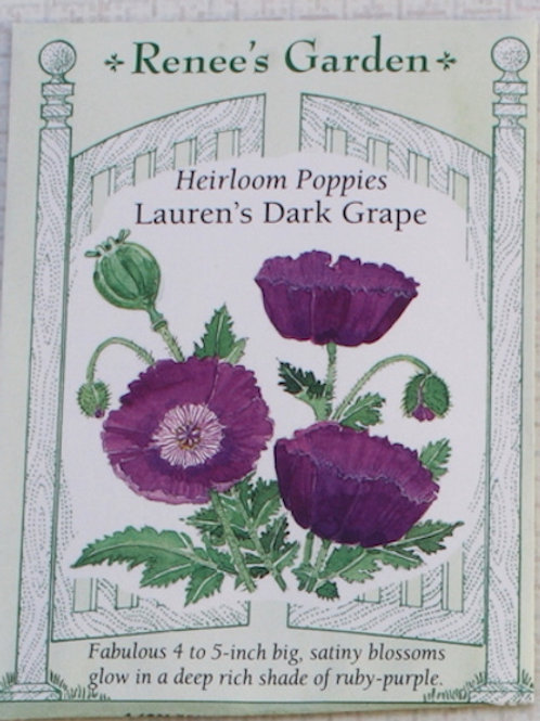 Renee's Garden Poppy - Heirloom Lauren's Dark Grape