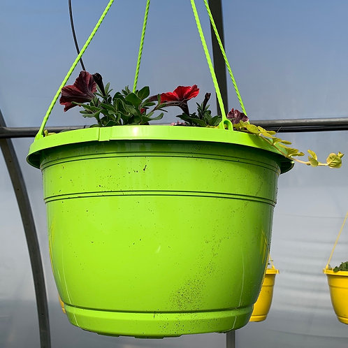 Hanging Baskets - 14-inch - Lime baskets