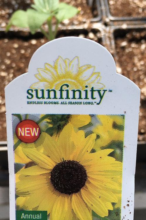 Sunfinity Sunflower - 5.5-inch pot