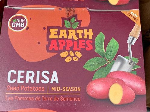 Earth Apples Seed Potatoes - 1 kg box
