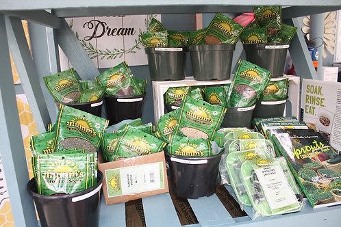 Sprouting Seeds Adzuki Beans