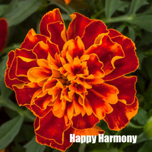 Marigold - Happy series