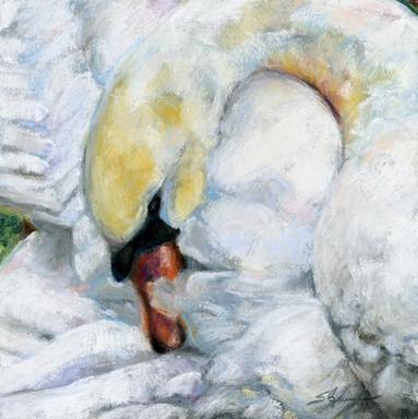 Brookgreen Swan