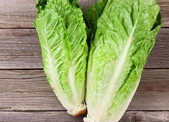 Green Cos Lettuce Head (1)