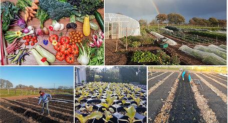 How to create a Regenerative Vegetable Garden