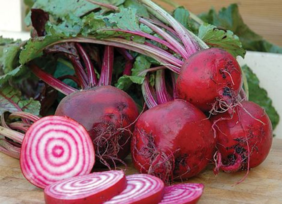 Beetroot Chioggia (bunch of 3)