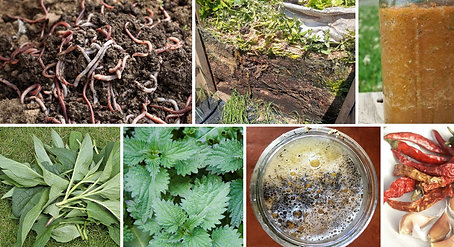 Feed your soil & heal your plants