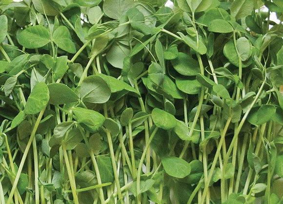 Pea Shoots (40-250g)