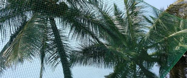 coconut-net.jpg