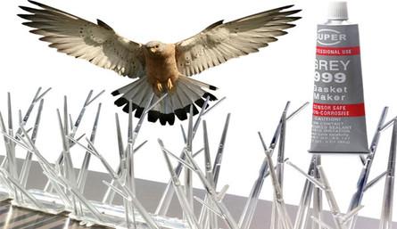 birdnet_1.jpg