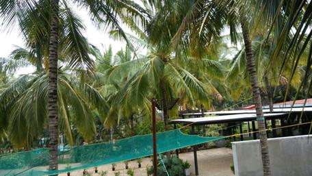 coconut-tree-safety-net-5.jpg