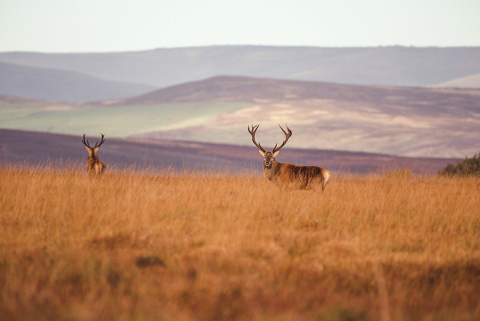 Wildlife_Photography_Course_Stag1.jpg