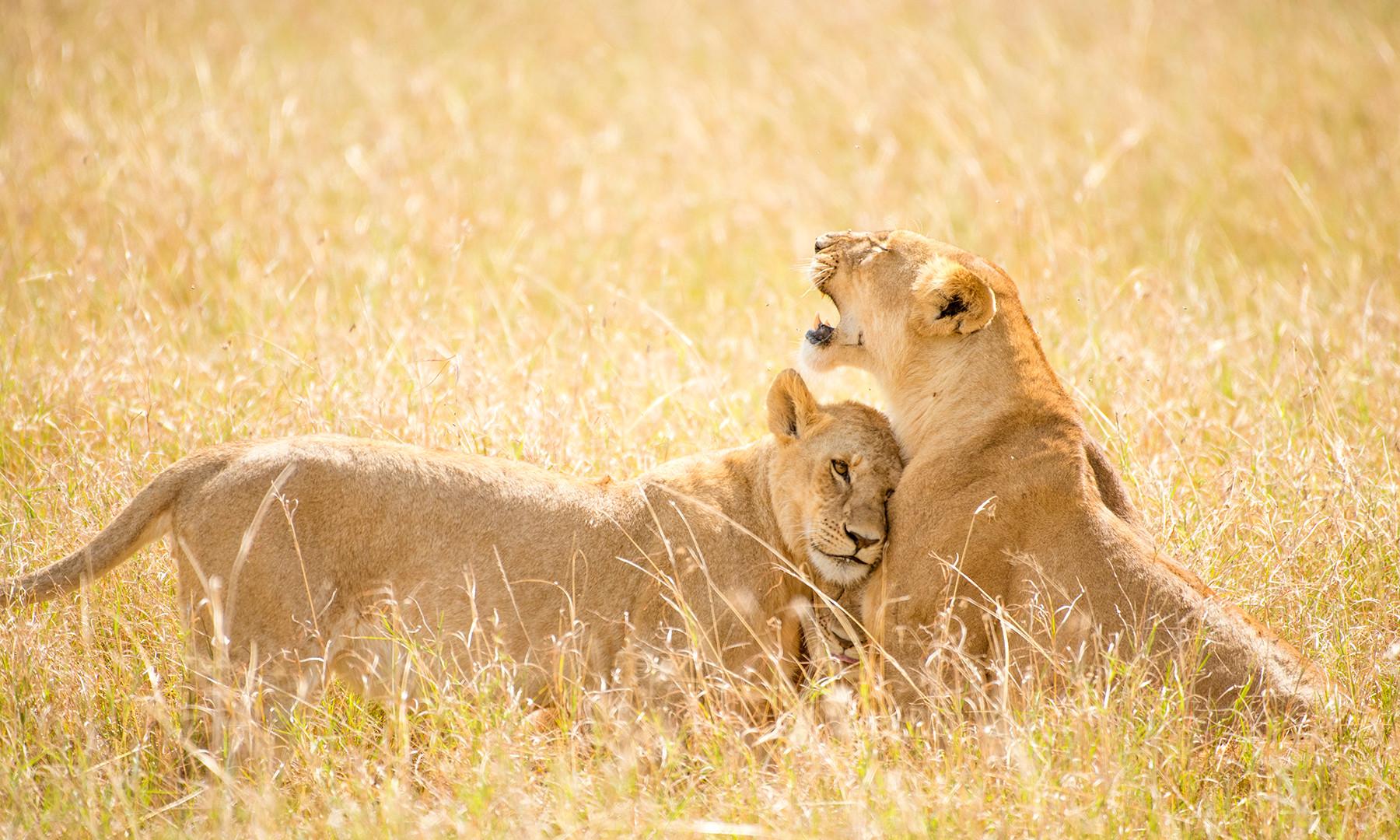 safarisinclair_photo_safari_zimbabwe_2.j