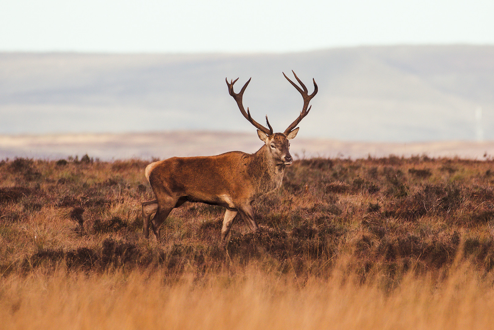 Wildlife_Photography_Course_Stag5.jpg