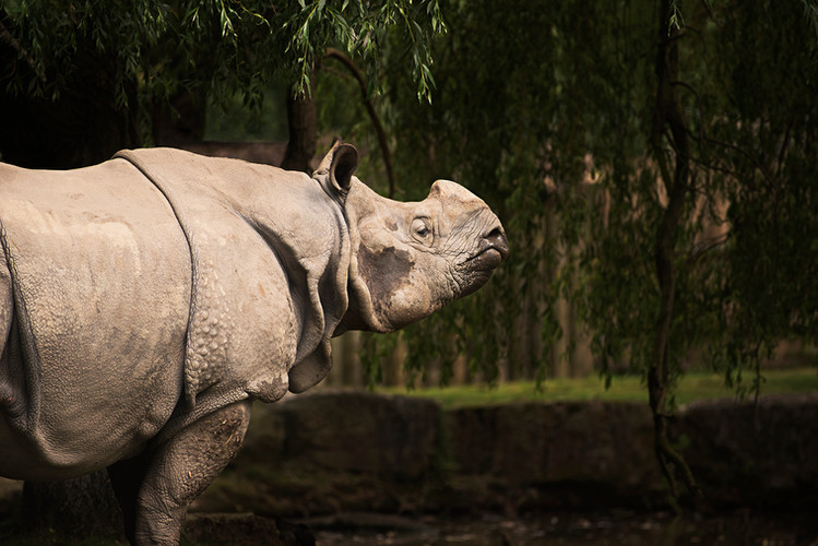 Wildlife_Photography_Course_AsianRhino.j