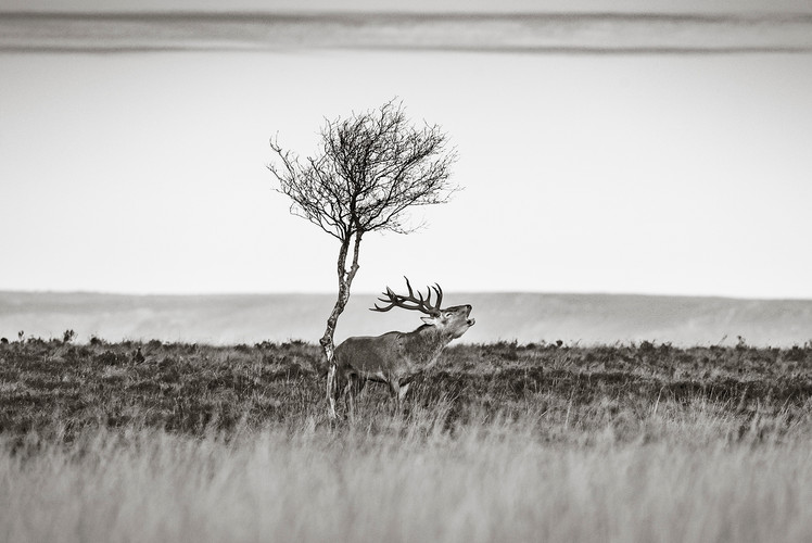 Wildlife_Photography_Course_Stag3.jpg