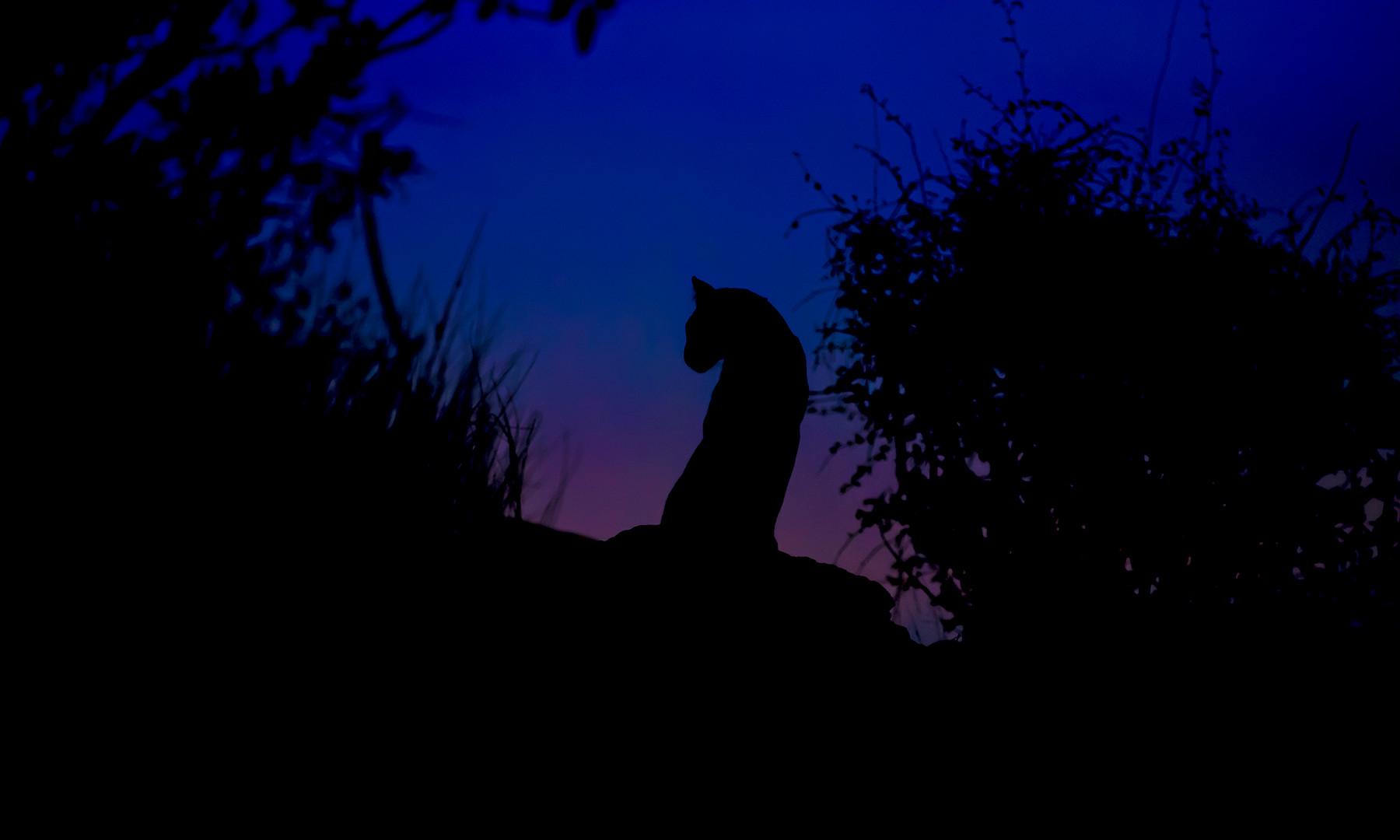 Leopard_8228-6.jpg