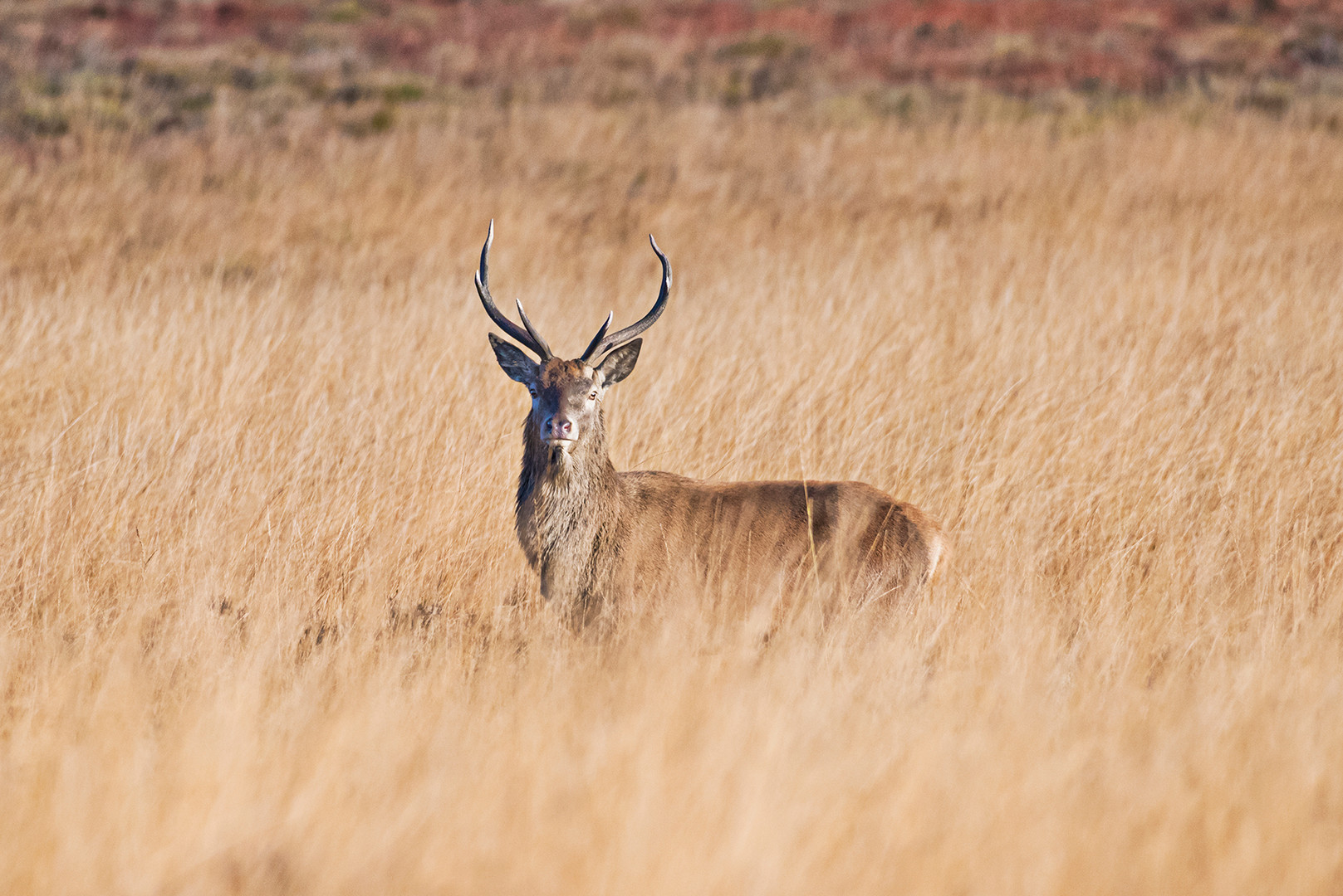 Wildlife_Photography_Course_Stag4.jpg