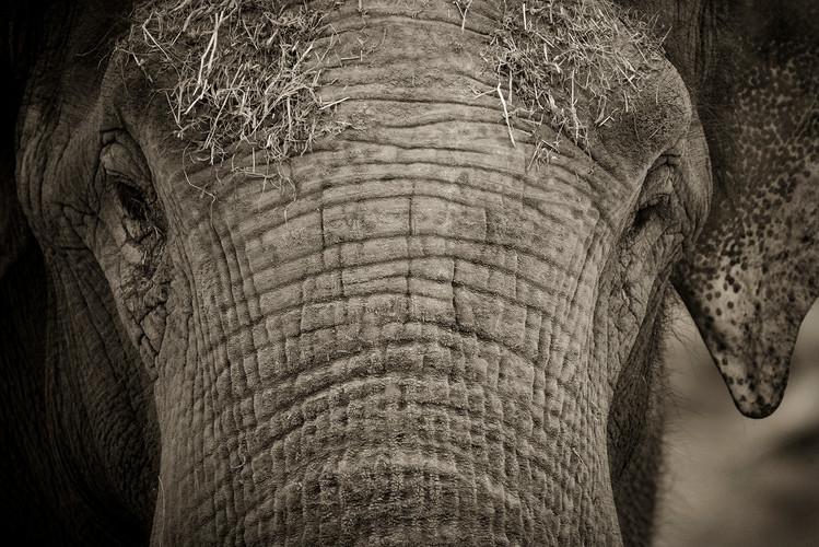 Wildlife_Photography_Course_AsianElephan