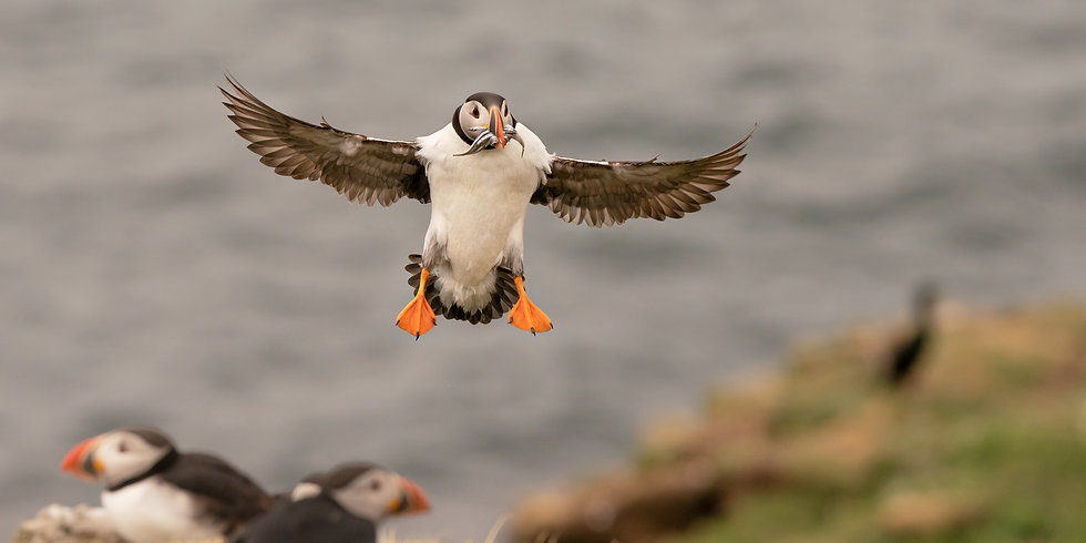 puffin_photography_workshop_course.jpg