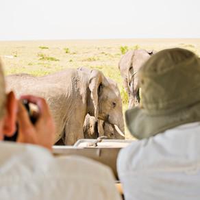 photo safari or normal safari?