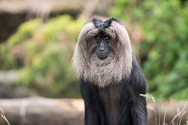 Wildlife_Photography_Course_Macaque.jpg
