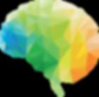 kisspng-human-brain-neuroscience-brain-d