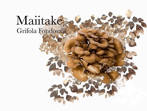 Maiitake square-1.png