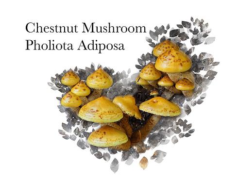 Chestnut Mushroom Square.png