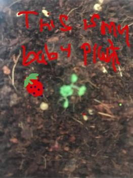 ms diane baby plant.mp4