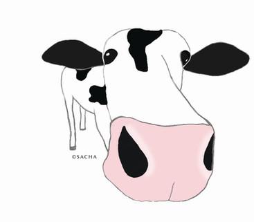 cow-illustration.jpg