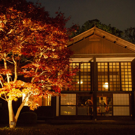 Edo-Tokyo Open Air Architectural Museum Illumination of Fall Foliage and Buildings