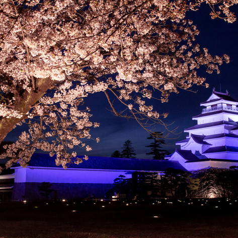 Tsuruga castle light up on spring