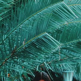 Palms Trees & Head 💡 ._- 😂⚖️👁_The sustainability of your perspective.jpg