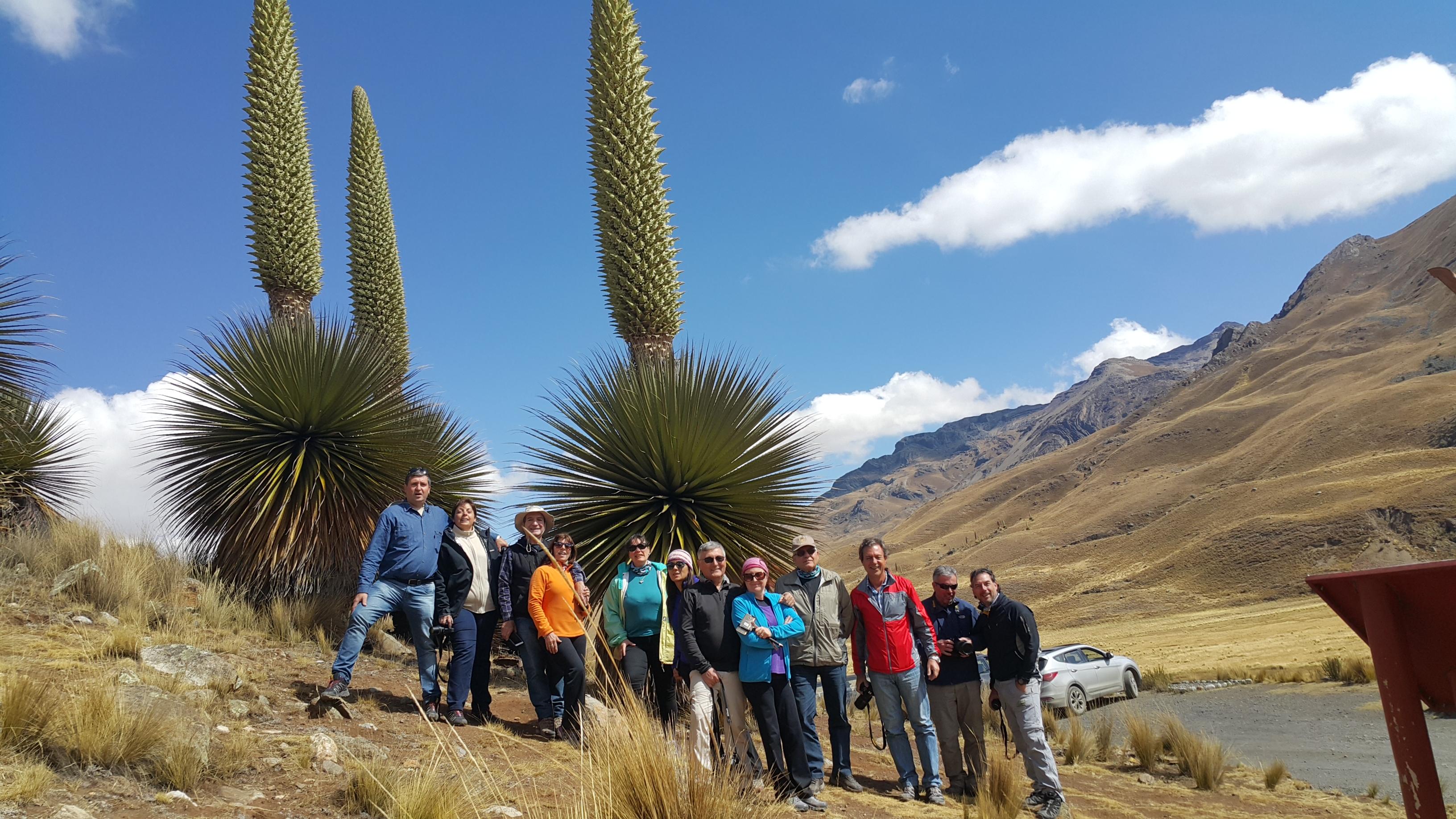Puyas Raimondi - Perú