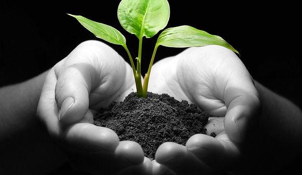 plant-smaller-website.jpg