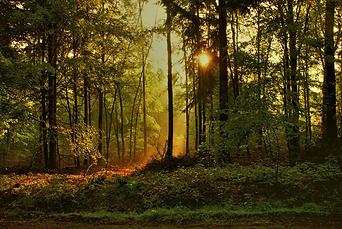 Sonnenaufgang.png