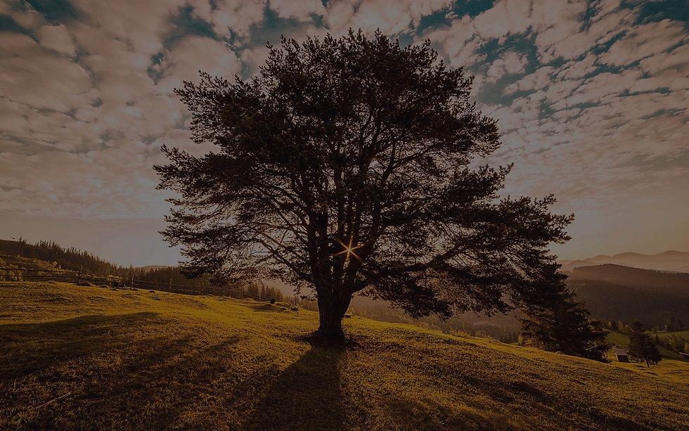 OakTree2_edited_edited.jpg