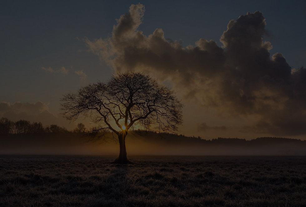 lone-tree-1934897_1920_edited_edited.jpg