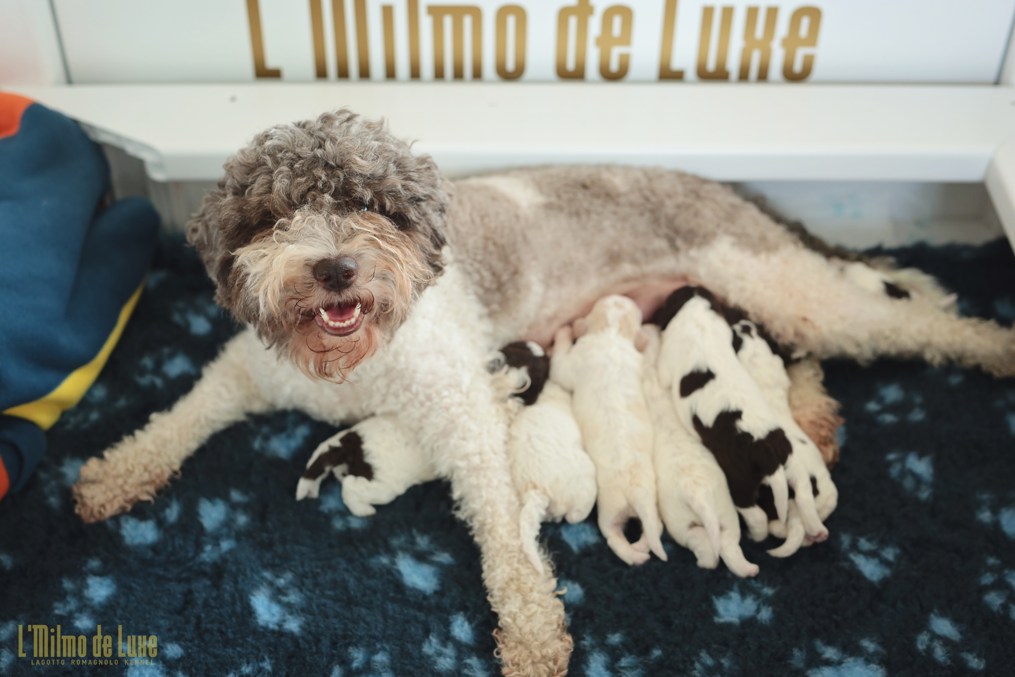 Milli Mom with her first litter