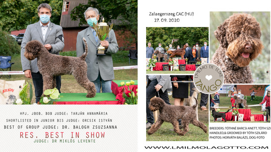 Tango Res. Best In Show in Zalaegerszeg and little photoshoot