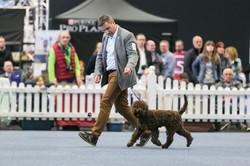 Puppy BIS, shortlisted in Salzburg