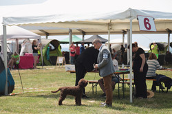 In ring in Umag, Puppy class