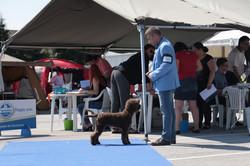 Cacib Bled, Puppy class