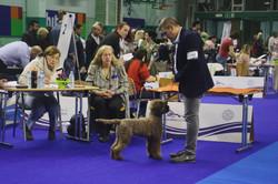 Lendava dog show