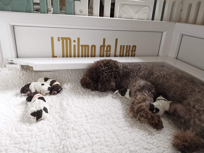 3days old puppies with Mommy