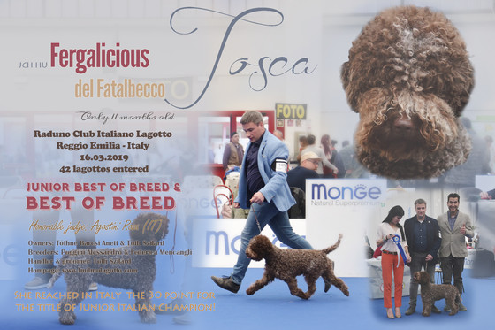 Reggio Emilia dog shows 2019