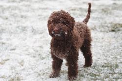 Vivi loves the snow