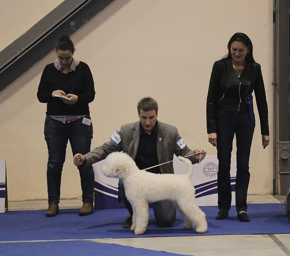 BOB in slovenian dog show