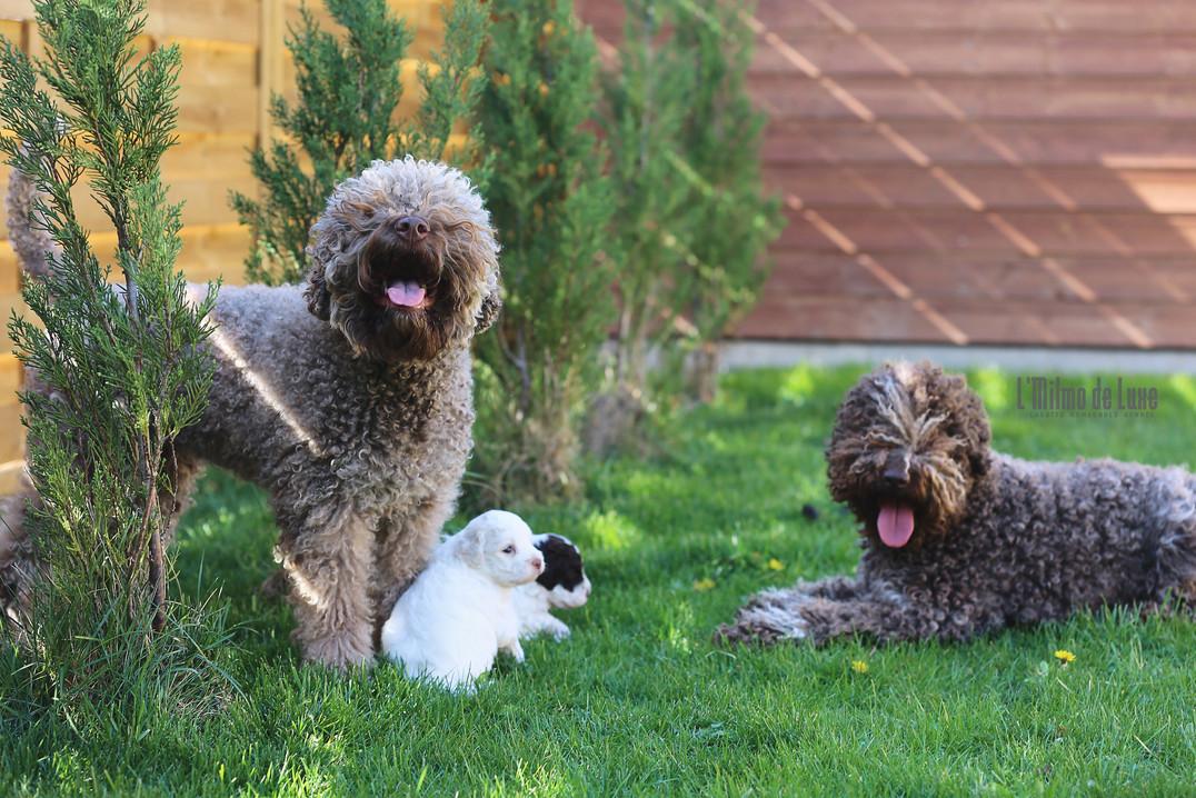Happy PuppySitters Vivi and Tosca